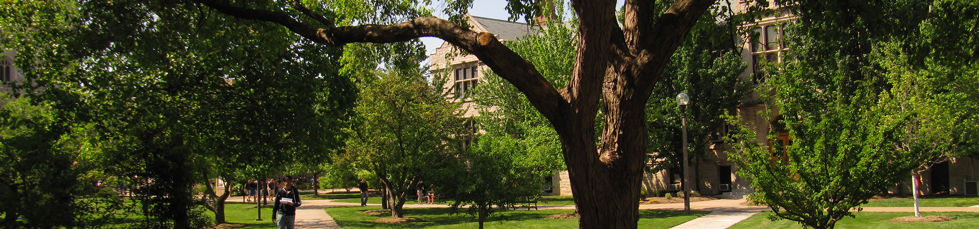 Trees on campus
